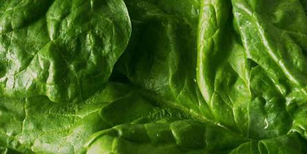 Les aliments riches en vitamine B9