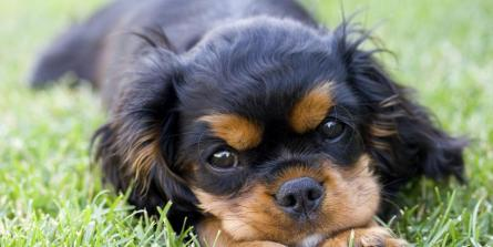 BARF : 12 avantages à nourrir votre chien naturellement