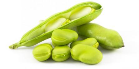 Houmous de fèves