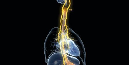 5 conséquences santé d'un nerf vague qui fonctionne mal