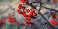 Stress : 5 plantes efficaces